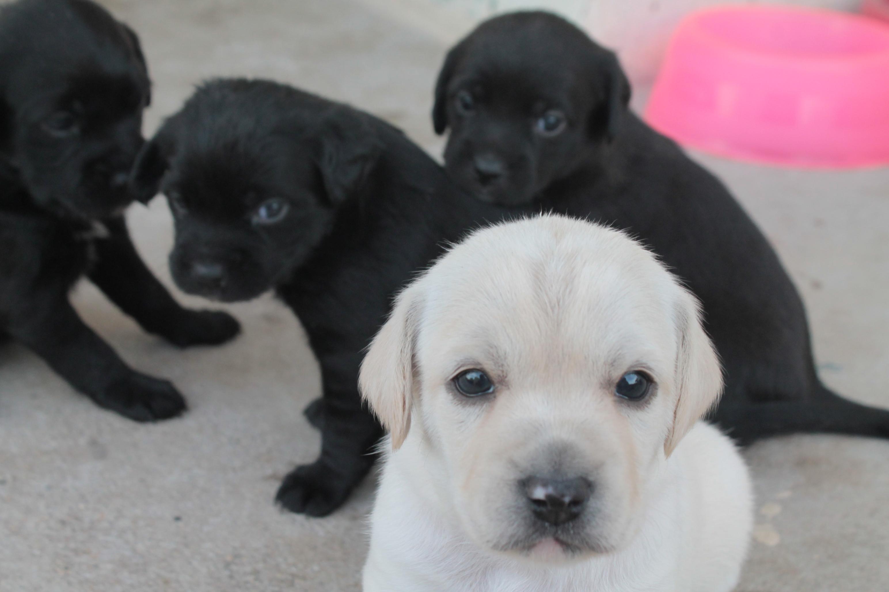 Doação de filhote de cachorro macho com pelo curto e de porte médio  #BE0D53 3088x2056 Aqui Não é Banheiro De Cachorro