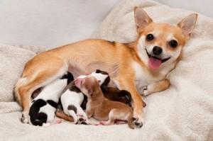 Cadela e seus filhotes