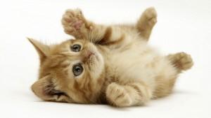 15 curiosidades sobre os gatos
