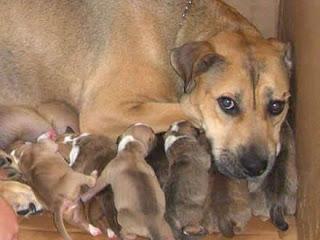 Cadelinha com seus filhotes