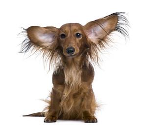 Doenças comuns nos cachorros