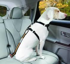 Transportando um cachorro no carro