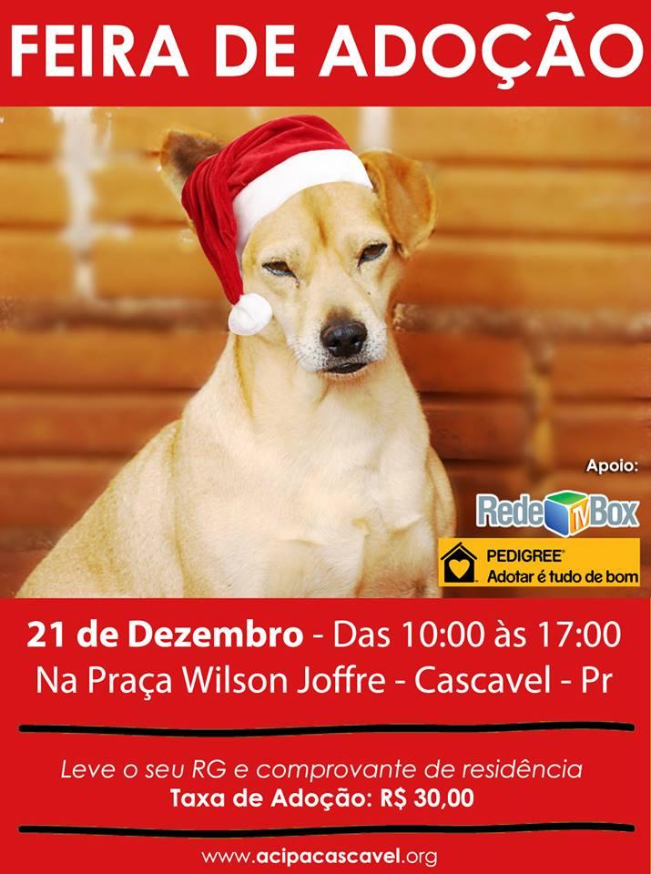 Feira de doação de pet em Cascavel/PR