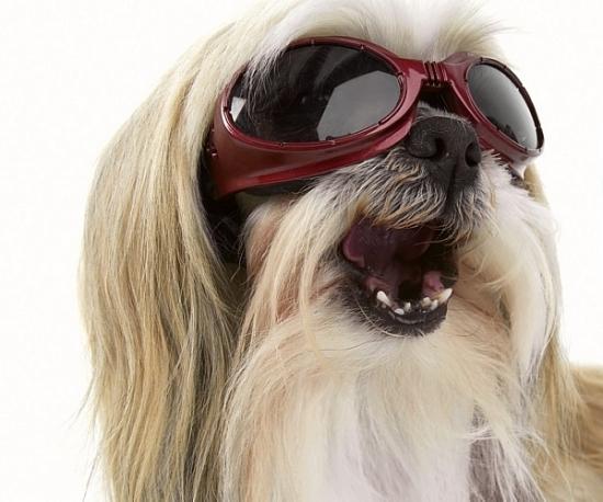 ec6f6200244b9 ... sendo assim a utilidade dos óculos para animais seria uma boa maneira  de prevenir possíveis doenças que pudessem surgir no futuro. Veja alguns  modelos