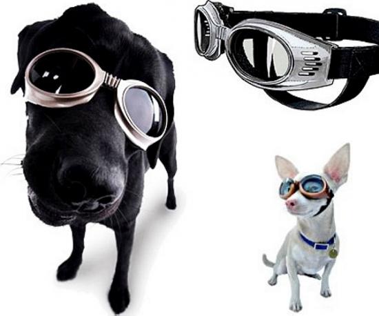 3ef092e5b3859 Óculos para cães  - Dicas e Cuidados