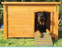 Casa amarela para cães grandes com rampa
