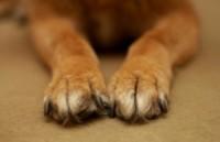 Unhas de cachorro