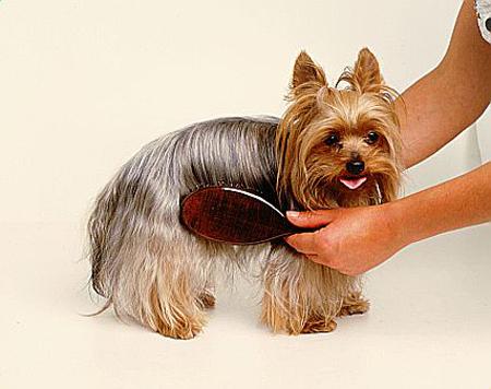 Escove seu cão para diminuir a queda de pelo